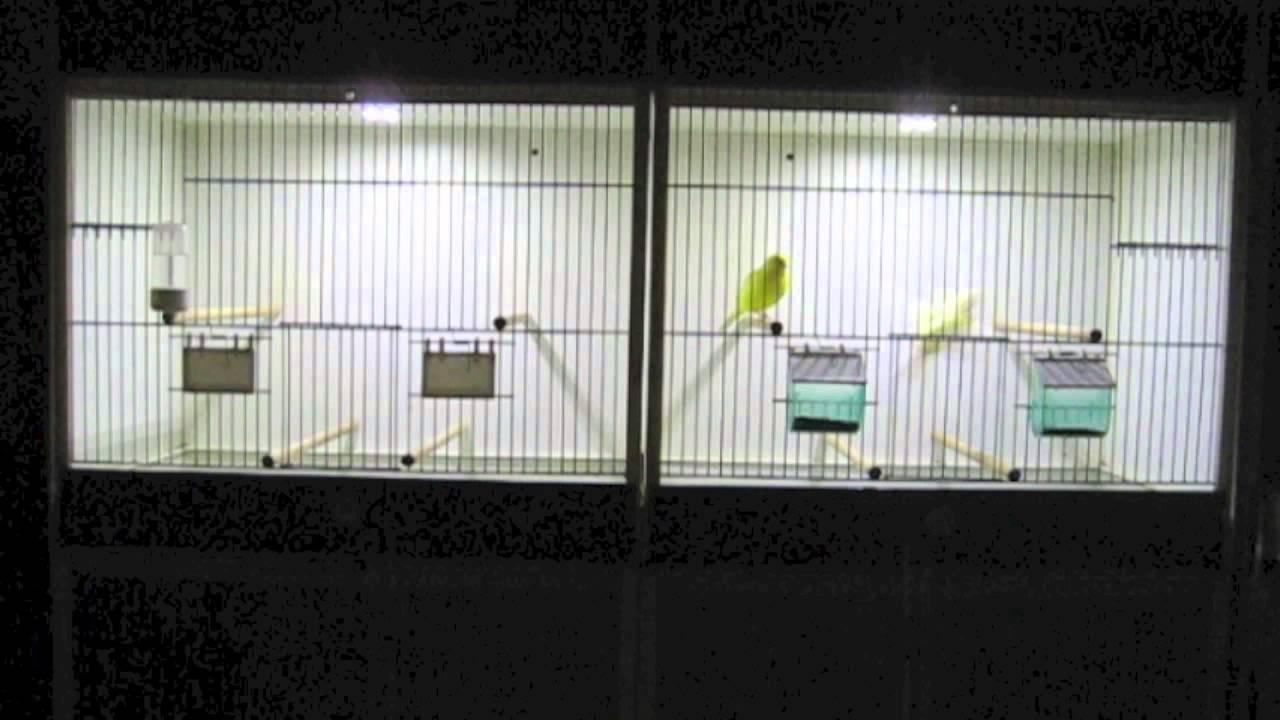 Automatische Led dimmer voor vogels, reptielen en vissen - YouTube
