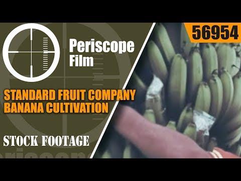 "STANDARD FRUIT COMPANY  BANANA CULTIVATION & PROMOTIONAL FILM  ""GREEN GOLD OF ECUADOR"" 56954"
