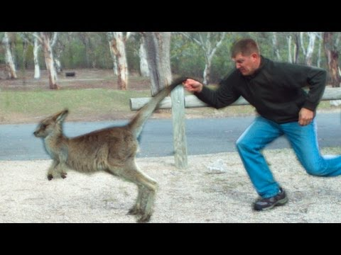 My Awesome Australia Adventure! - Smarter Every Day 99