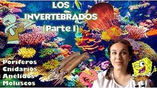 Animales invertebrados PARTE I (Poríferos, cnidarios, anélidos y moluscos) - Bio[ESO]sfera. 1º ESO