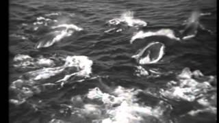 Китовый промысел (Охота на кита №2)