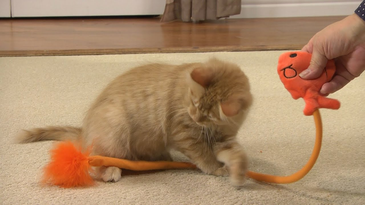 your kitty will love this snap cat toy drsfostersmith youtube
