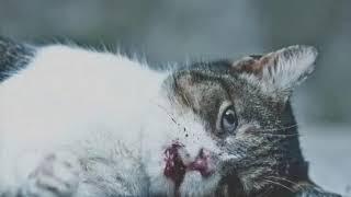 Спасайте  животных не буте злыми (трогательное видео)СМОТРЕТЬ ВСЕМ !!!!!!!😭