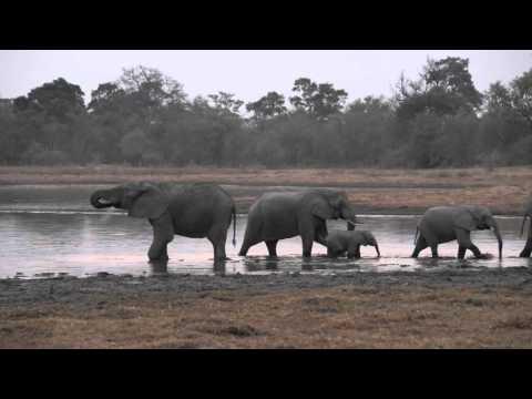 Elephants At A Waterhole, Tuskers Bush Camp