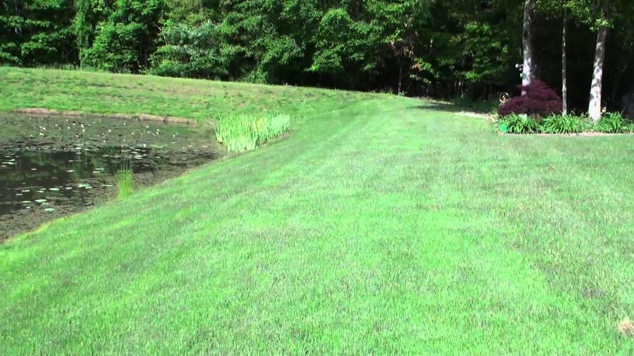 Compadre Zenith Zoysia Grass Seed Vs Plugs Part 4 The Next