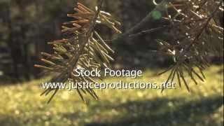 forest pine needles CU - Video Production from Justice Productions