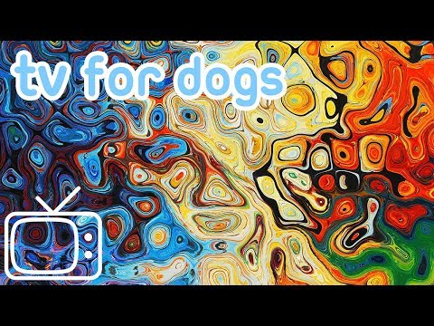 Videos for Dogs to Watch! Abstract Chillout Dog TV Entertainment with Music!