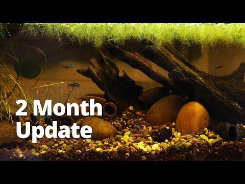 Blackwater Aquarium Setup For Bettas Action News Abc Action News