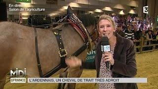 ANIMAUX : L'Ardennais, un cheval de trait très adroit