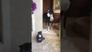 Кот, который любит дождь