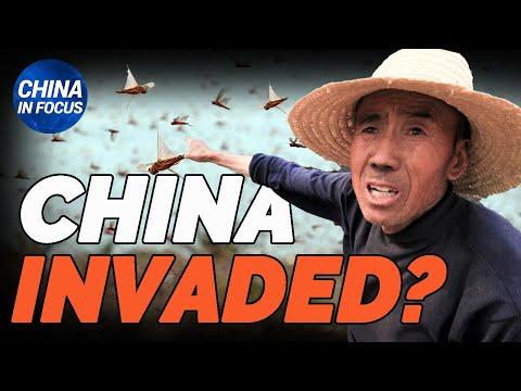 China's mass DNA sampling raises concern; Vaccine scandals; Suspicious report claims bumper harvest