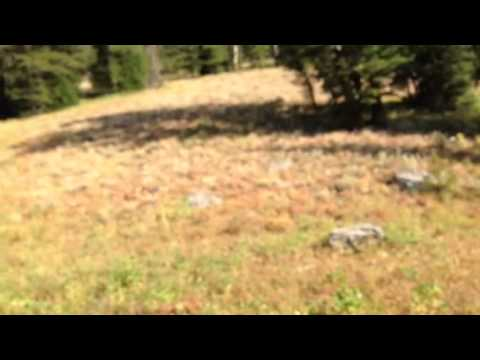 Wolf sounds from Idaho, moose creek