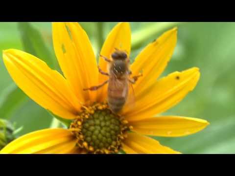 AMETEK Vision Research Bees In Slow Motion