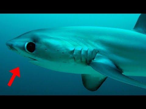13 Cutest Sea Creatures Ever!