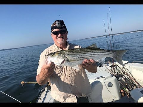 Pursuing Stripers On Lake Texoma