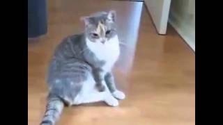Кошками и животными Пьяный кот, приколы про кошек онлайн бесплатно