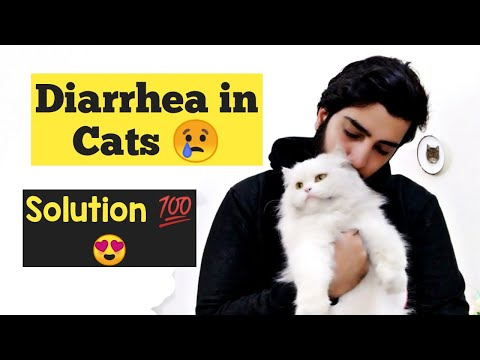 How To Treat Diarrhea In Cats And Kittens |  Diagnose Diarrhea In Cats | Remedies For Cat Diarrhea