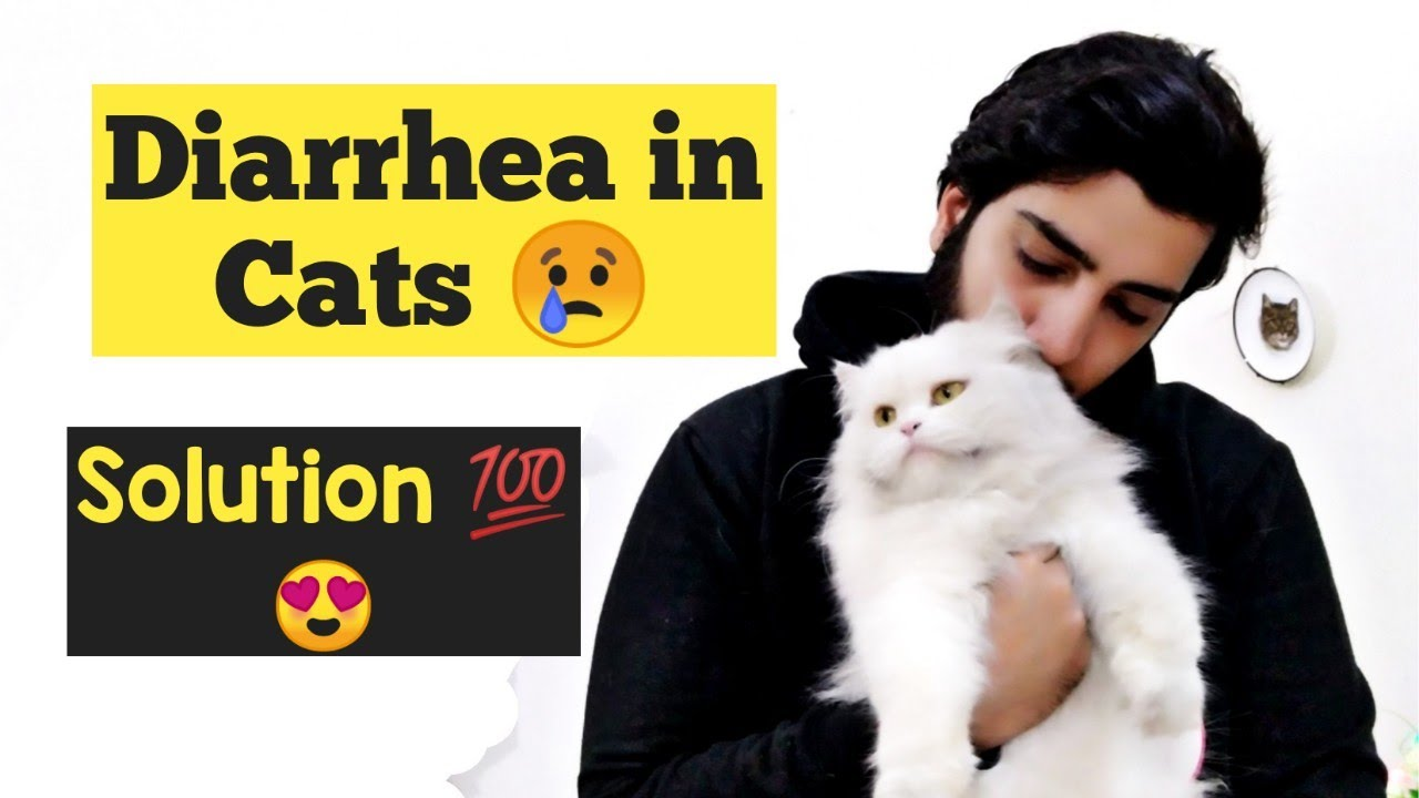 How To Treat Diarrhea In Cats And Kittens Diagnose Diarrhea In Cats Remedies For Cat Diarrhea Youtube