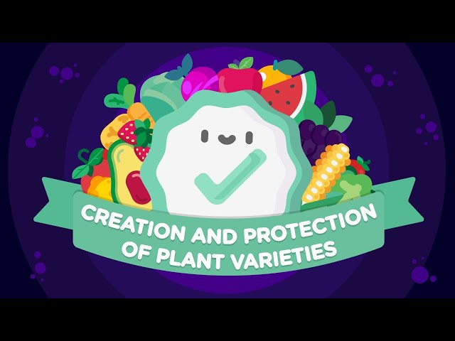 World Plant Variety Protection | Why is so important?