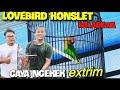Lovebird Konslet Bala Dewa Gaya Ngekek Extreme Patah Leher  Mp3 - Mp4 Download