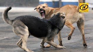 Бродячие собаки насмерть загрызли мужчину в Гомельском районе