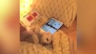 Маленькая собака хлопает лапами от счастья