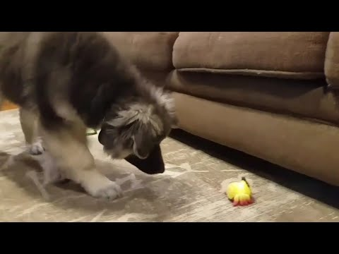 Fluffy Puppy Gets Brave with YELLIES Toy