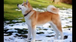 топ самых дорогих редких собак