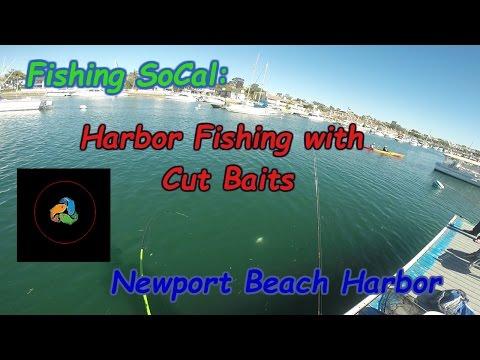 Newport Harbor Dock Fishing | #ReCastFishing