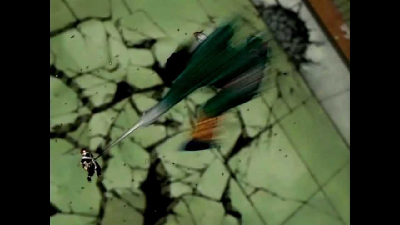 Gaara Vs. Rock Lee - ULTRANUMB ( 我愛羅 VS. ロック・リ ...
