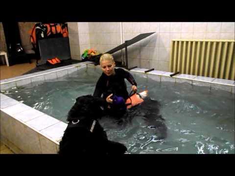 Eszka Orosz Fekete Terrier Úszás