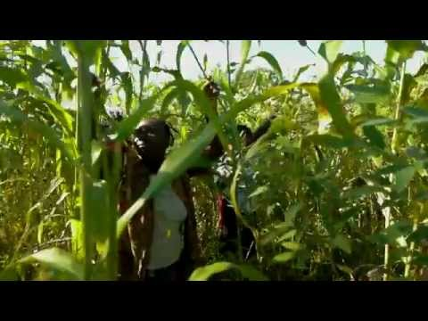 boosting-agriculture-in-haiti-youtube