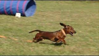 Самых быстрых и ловких собак определили в Приморье