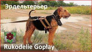 Собака эрдельтерьер увидела Лунопарк!