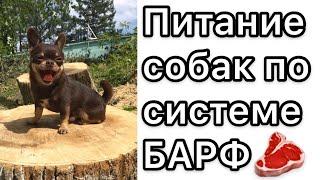 Система питания собак и кошек БАРФ