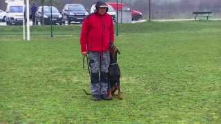 Gotti V.h. Wantij - Obedience Training (2013) Lowres