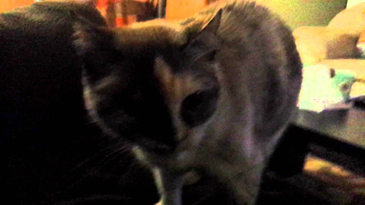 Cat Is Making Weird Noise With Mouth