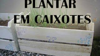 Plantar Flores e Frutas em caixotes de Feira