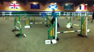 Honey Moster Small 5-7 Papillon Jumping Dog Agility Gleniff
