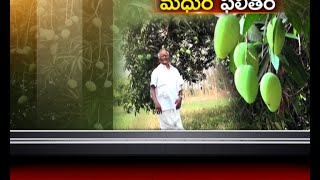 Farmers in Krishna District Succeeds with Mango Farming; ETV Report