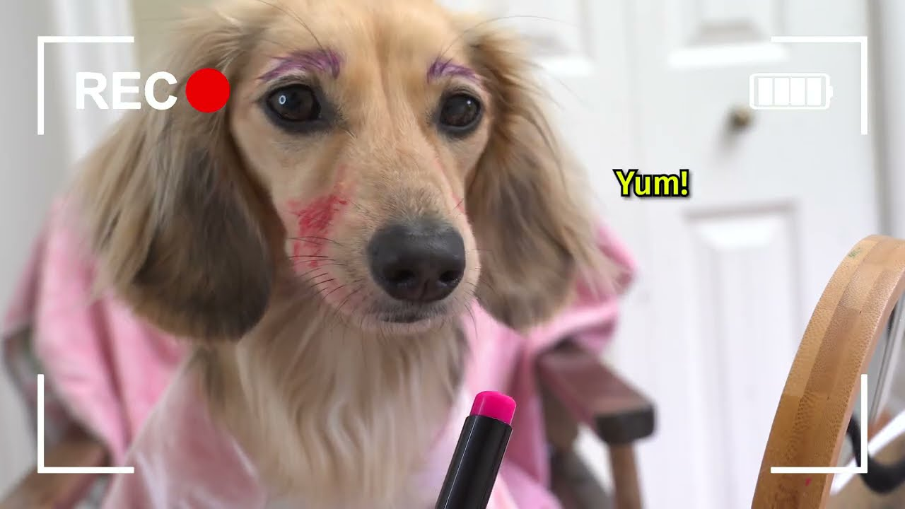 Download Ep#10: Ain't No Puppy No More! - Daphne's Vlog (Cute Dachshund Video!)