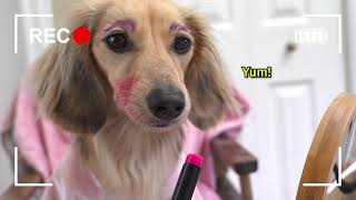 Ep#10: DAPHNE'S VLOG  Ain't No Puppy No More! (Cute Dachshund Video!)