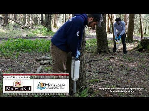 AccessDNR June 2019 - Maryland Department Of Natural Resources