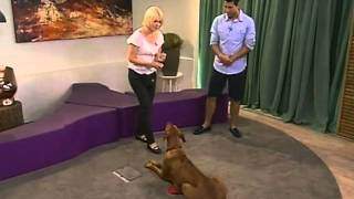 Training Rhodesian Ridgebacks On Expresso