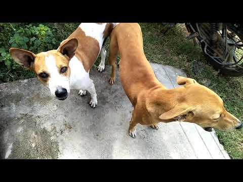 My Area street dogs
