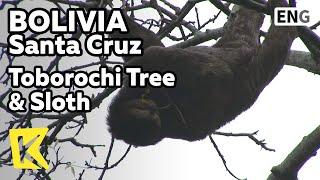 【K】Bolivia Travel-Santa Cruz[볼리비아 여행-산타크루스]아침 간식, 닭고기 요리 살떼냐/Saltena/Salteneria/Santa Cruz