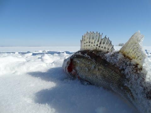 рыбалка на волге кама устье