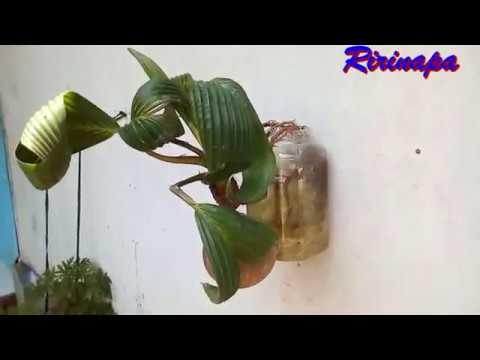 Bonsai Gantung Media Air Youtube
