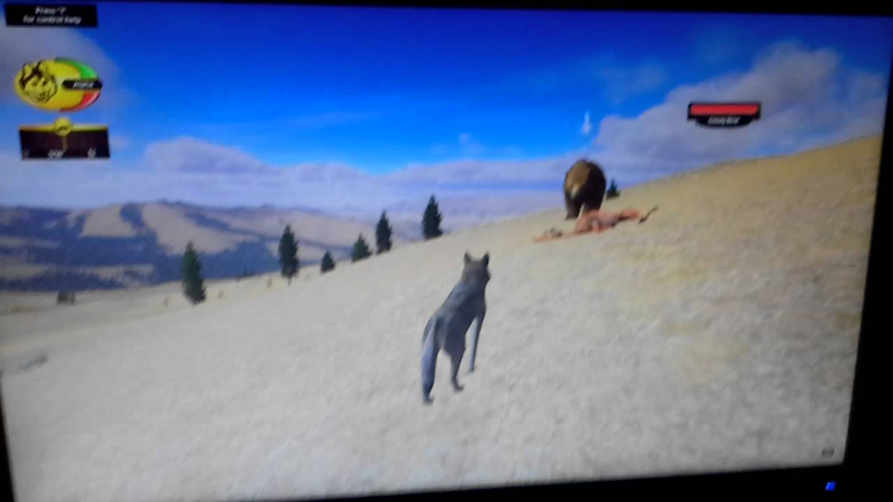 Download A bear attack on wolfquest (short) fighting food
