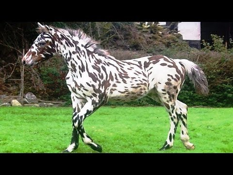 World's RAREST Horse Breeds Ever!